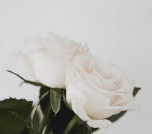 ดอกกุหลาบสีขาว สัญลักษณ์วันแม่ประเทศเวียดนาม
